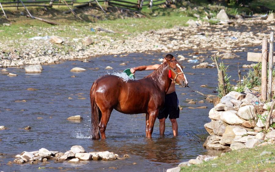 кінь купання