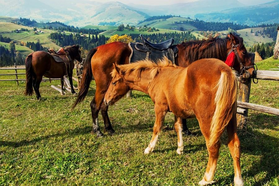 кінь стоянка